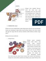 Anatomi Glandula Saliva-tugas Dr.budi Fix