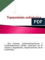 Transmisión colinérgica
