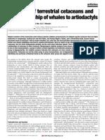 relaciones de las ballenas con los artyodactilos