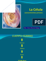 Celula y Tejidos III