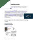 Contracción muscular microscópica