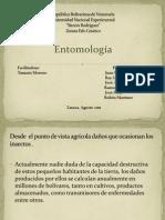 presentacion de entomologia.