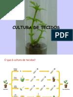 Cultura de Tecidos CURSO