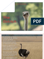 Fleet-Footed, Flightless, and Fascinating—The Ostrich