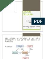 Exposición de Lesión celular