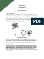 17 & 18 Div Magnoliophyta _Clase Liliopsida