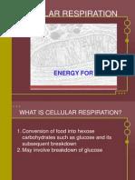 celullar respiration2