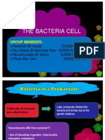 The Bacteria Cell