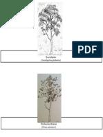 Flora Apalpário