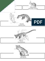 Fauna Apalpário