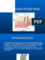 Absorcion Intestinal