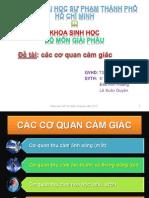 giac-quan_K34SINH2B