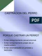 Castracion Del Perro