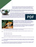Aquariofilia - Dicas Para Manter Seus Peixes Saudáveis 1pg - by CHERINHO