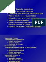 Parasitologia (3)