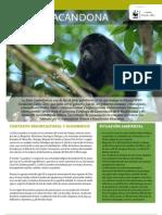 WWF FCS 15 Chiapas - Lacandona
