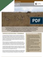 WWF FCS 05 Desierto Chihuahuense - Pastizales