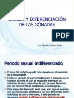 4ORIGEN Y DIFERENCIACIÓN DE GÓNADAS