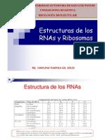 1 Estruct de RNAs y Ribosomas