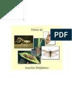 Tema 10. Insectos neópteros