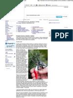 HowStuffWorks - Podando árvores, arbustos e vinhas