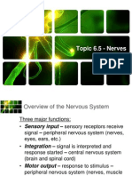 6.5 - Nerves (SJHS)