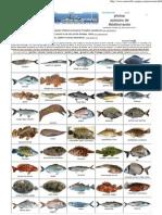 photos de poissons mer méditerranée