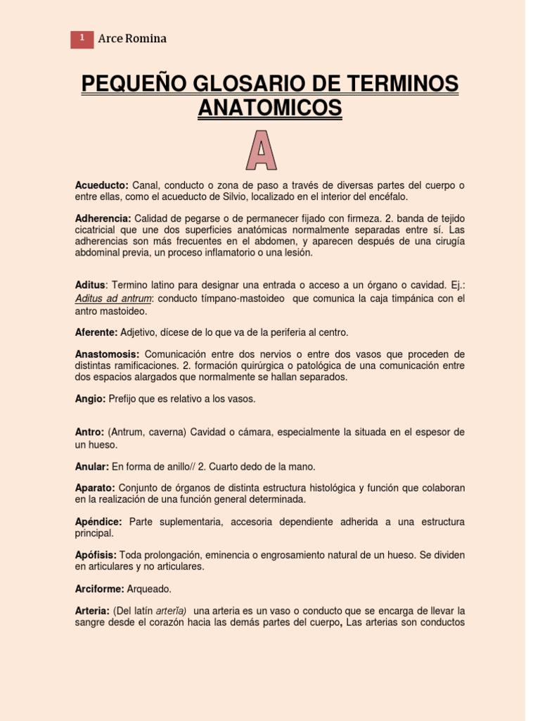glosario de anatomia