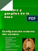 Cerebro y Ganglios de La Base6