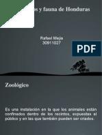 Zoologicos y Fauna de Honduras