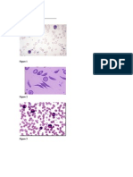 Bloods Pathology Histology Lab