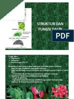 Copy of Struktur Dan Fungsi Daun [Compatibility Mode]