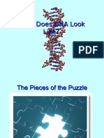 What Does DNA Look Like