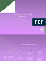 Desarrollo Del Sistema Linfatico