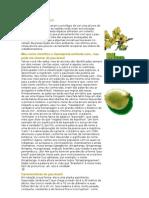A árvore pau-brasil