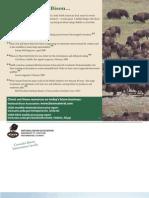 Bison Producers Brochure