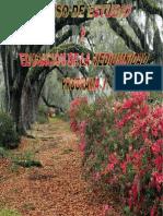 Curso_De_Estudio_y_Educacion_de_la_Mediumnidad_Programa_1