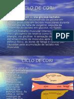 4E-Ciclo de Cori