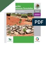 579Restauración de ecosistemas forestales