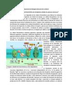 practica fotosintesis