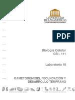 Clase 38 Apunte - Guía Lab10 Gametognesis Fecundación y Desarrollo Temprano