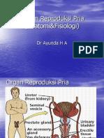 Fisiologi Reproduksi Pria