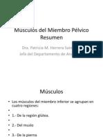 musculosmiembropelvico (1)