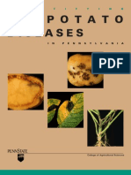 Potato Disease