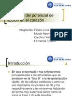 Anatomía del potencial de acción en el corazón (1)