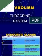 Anatomy of the Endocrine System II