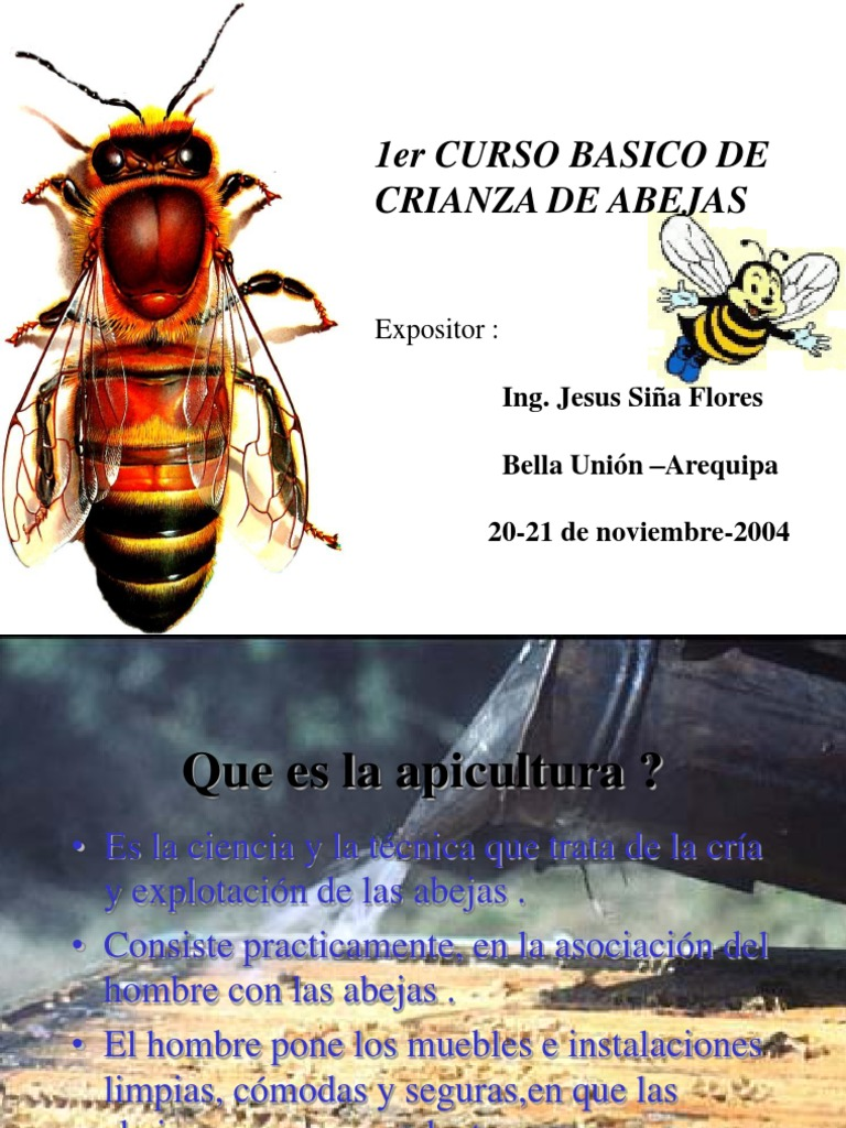 abejas (4)