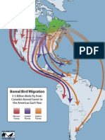 Mapa Migracion Aves -Canada-Centro y Sur America