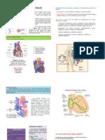cardiotonicos