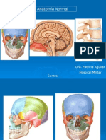 Anatomia Normal Snc
